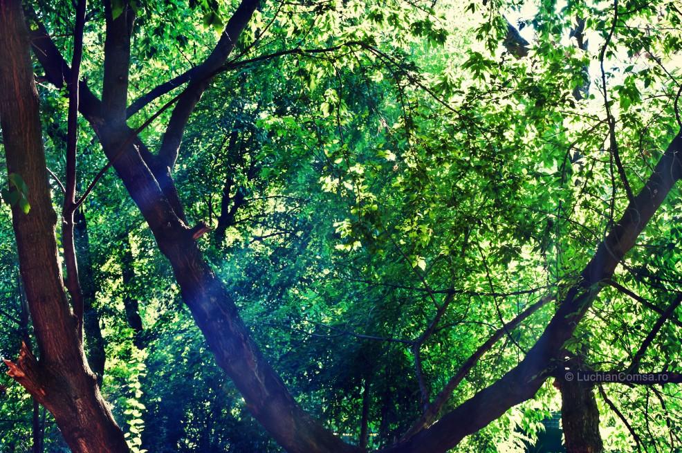 Raza de lumina…