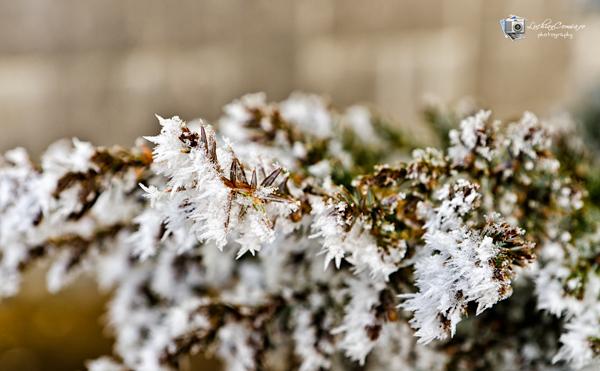 Flori de gheata peste Bucuresti
