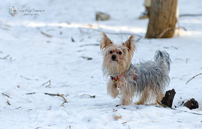 Iarna necuvantatoarelor! #2