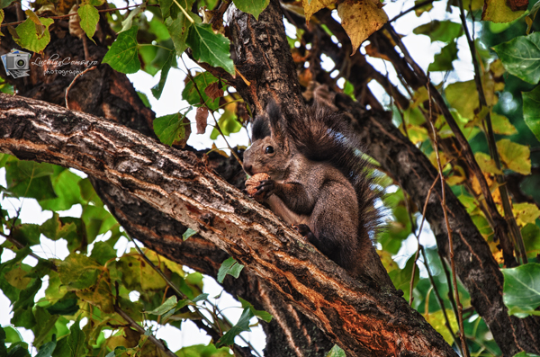 Veveritele din parcul Herastrau!