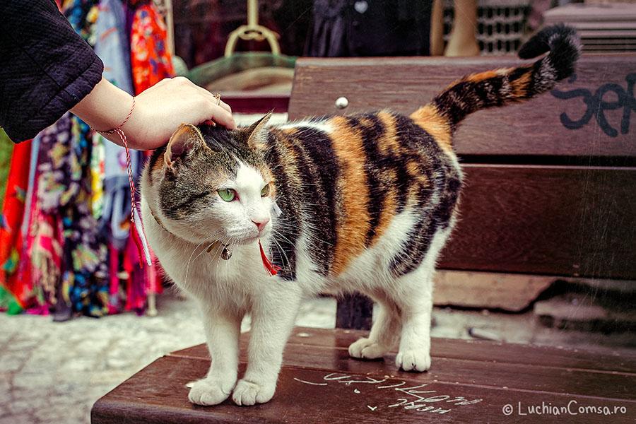 Pisica cu fite de Lipscani!