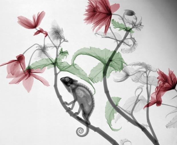 Fotografii color, raze X, cu plante si animale